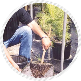Pot Pruner fabric liner for growing trees in containers