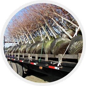High Caliper helps customers with harvesting and transportation
