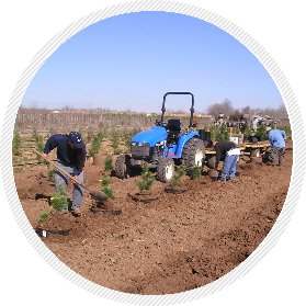 Planting with Root Control Bags