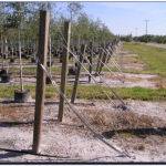 cable line posts
