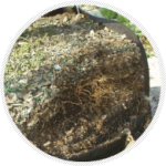 Tree bags help to grow a denser root ball