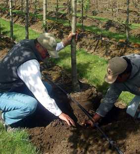 Planting trees in Root Control Bags