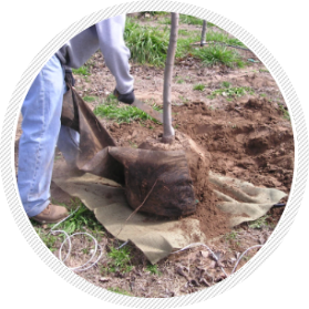 Can tree roots penetrate pvc pipe regret, that