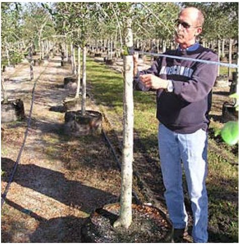 Protecting trees from blowover with Tree Collars