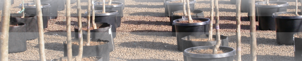 Effect of container type on shade tree root growth