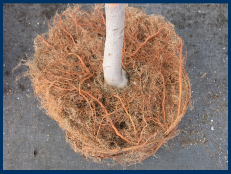 Root pruning within a fabric grow bag