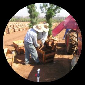 Transplanting trees into a box