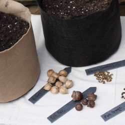 Winter Sowing Tree and Shrub Seeds