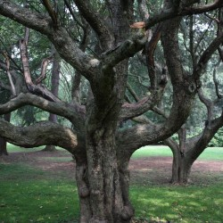 5 Ways Trees Keep Our Planet Healthy